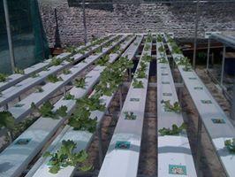 hydroponics 5